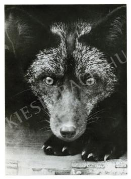 Reismann János - Ragadozó, 1939 körül