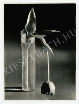 Kertész, André - Melankolikus tulipán, 1939