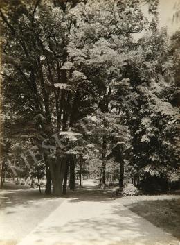 Balogh Rudolf - Debreceni nagyerdő, 1935 körül