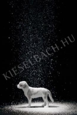 Gerhes Gábor - Kutya télen 1/5 (2009)