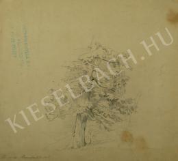 Mednyánszky László - Fenyőfa (Tanulmány) (1861)