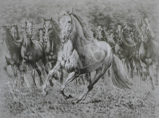 For sale Unknown painter - Grey Horse 's painting