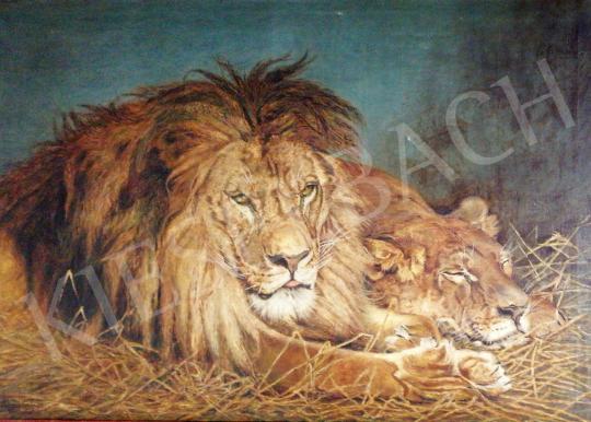 Kovács Kálmán - Pihenő oroszlánok festménye
