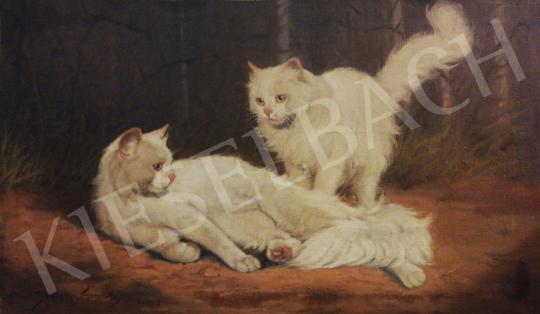Eladó Rainerné Istvánffy Gabriella - Díjnyertes fehér angóra macskák festménye
