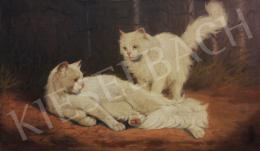 Rainerné Istvánffy Gabriella - Díjnyertes fehér angóra macskák