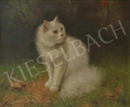 Boleradszky Benő - Perzsa cica