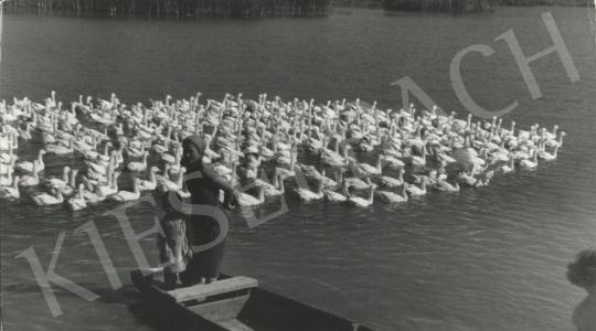 For sale  Szőllősy, Kálmán - Duck-Pond, c. 1960 's painting