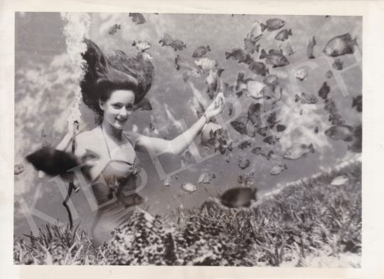 For sale  International News Photos - One mermaid and her animals (Frances Dwight feed fish), 1951 's painting