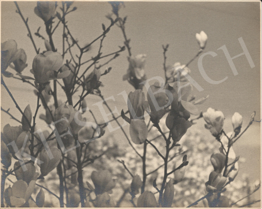 For sale Unknown artist - Magnolia tree 's painting