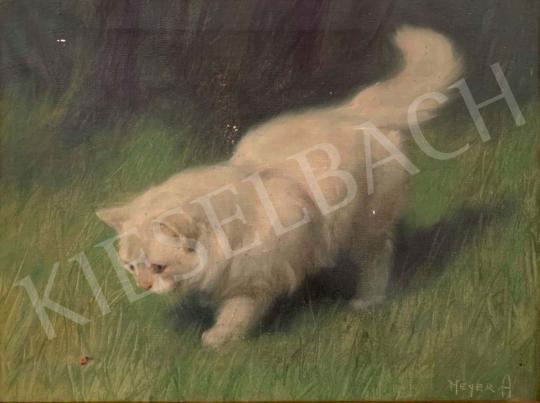 Eladó Heyer Artur - Fehér cica katicával festménye
