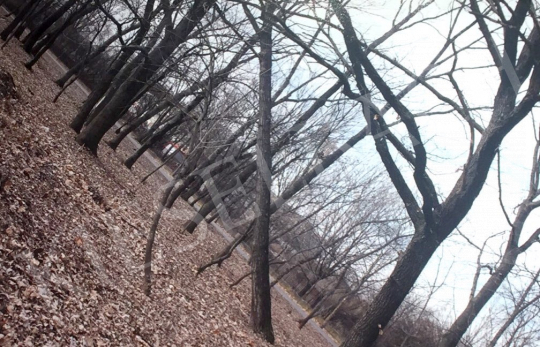 Eladó  Bukta Imre - Egyenes gerincre állított fák I. festménye