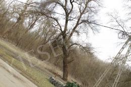 Bukta Imre - Egyenes gerincre állított fák III.