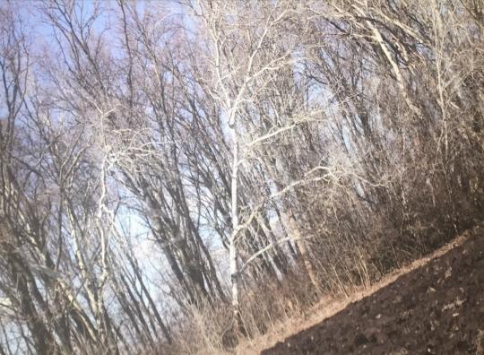 For sale  Bukta, Imre - Trees on Straight Ridge IV. 's painting
