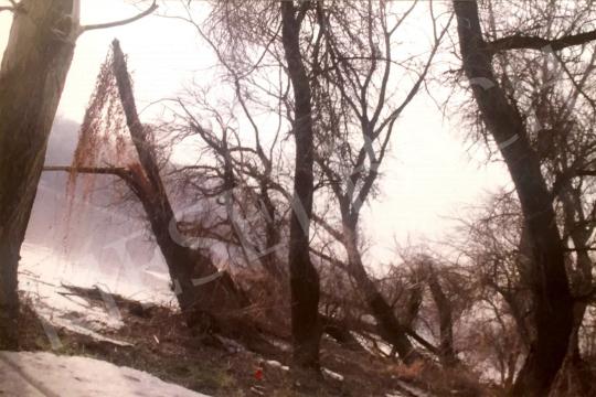 For sale  Bukta, Imre - Trees on Straight Ridge V. 's painting