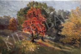 Haller György - Fények, árnyak, színek