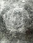 Bukta, Imre - Nest with small scythes