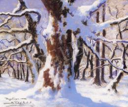 Sztelek Norbert - Tél a Nagybányai erdőben