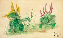 Ligeti Antal - Mezei virágok